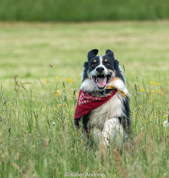 Kennys Lebensfreude, Hundefoto