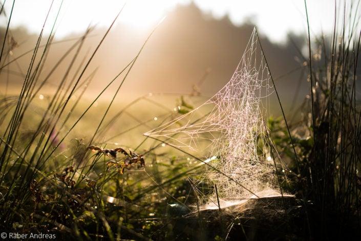 Spinnennetz Region Pulten, Adetswil