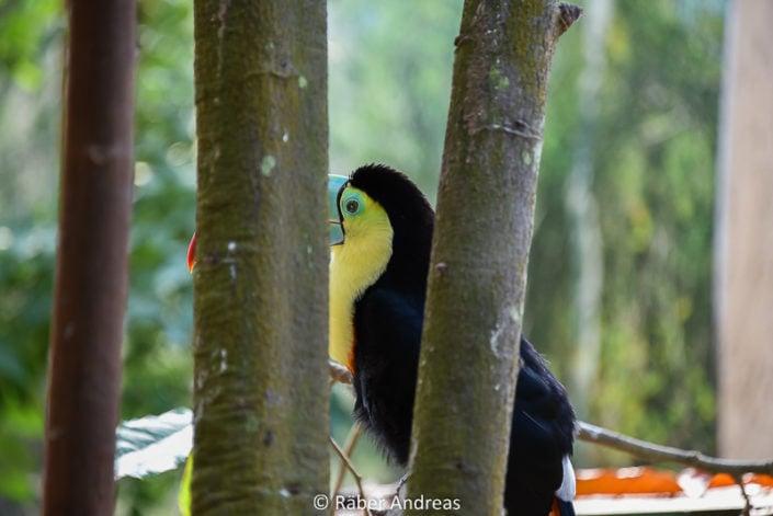 Vogel im Papiorama, Kerzers