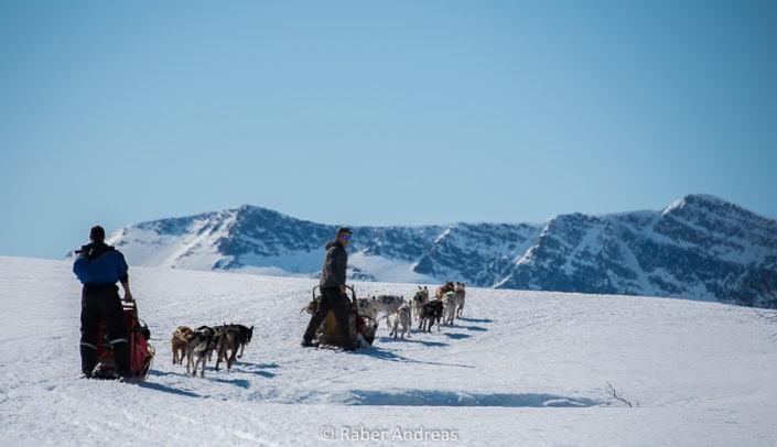 Tromsoe -Norwegen, Hundeschlitten fahren