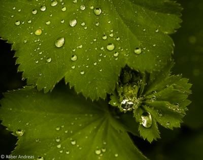 Naturfotografie: Thema Wasser, Regentropfen