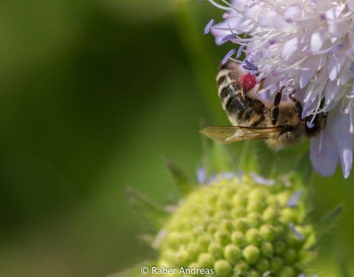 Insekt im Wald Adetswil - 2017